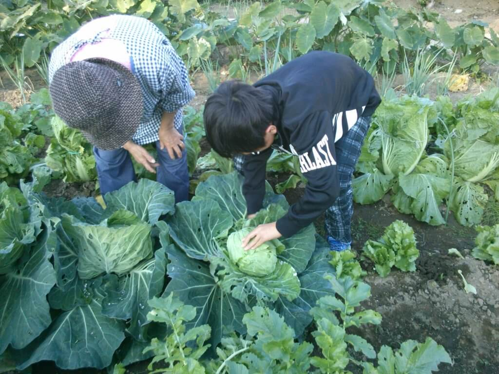 野菜作り・家庭菜園 - 育てて、食べて楽しめる趣味