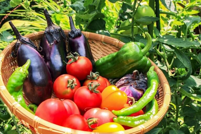 手軽に野菜作りができる「シェア畑」