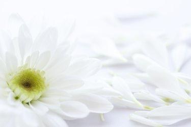 終活について知る!無料冊子「いい葬儀の手引き」【喪主・葬儀や相続などに役立つ】